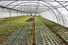 環境に優しく高効率 日本では、産廃業者が新しい農業に取り組んでいる! =中国メディア