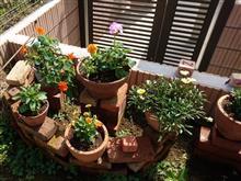 お庭のモデルチェンジ2