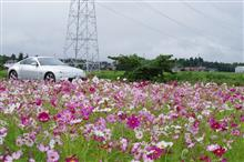 ''秋桜'     三重県菰野町……Z33