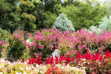 花と緑のオアシス♫和歌山県植物公園緑花センター
