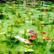 えっ、これ絵画じゃないの!? 油絵のように美しい日本の池の風景に感動=中国メディア