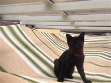 屋根とサンシェードの隙間@暖かいしユラユラユラユラ快適だニャン