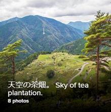 天空の茶畑に。