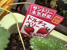 いちご 胃血吾 イチゴ 2
