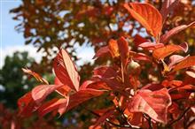 秋の日は...
