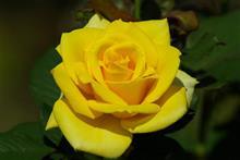 朝から庭先洗車で綺麗にしたので小田原フラーガーデンへバラを見に行ってみました。