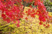 紅葉シーズンがやってくる~(^ω^)