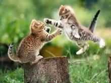 「 戦う、猫たち 」 ~