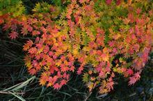 晴れ間を願って紅葉を撮影