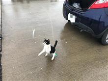 雨の中釣りした。