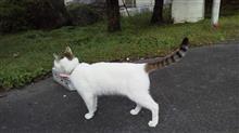サーキットの猫