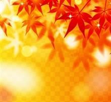 秋の気配‼️