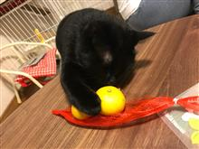 黒猫とみかん