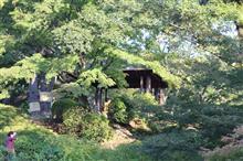 日本庭園をお散歩♪ 旧古河庭園◇