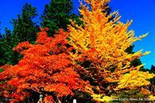 高野山へ紅葉狩り✨