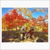 紅葉狩りだワン!(^_-)-☆