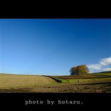 Photo drive ~秋晴れに誘われてカラマツの丘へ~