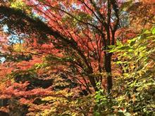 紅葉シーズン最盛期