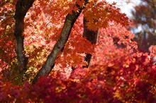 冬桜を見に桜山公園と城峯公園へ
