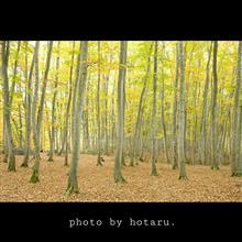 色づき始めた美人林へ