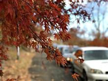 秋色 Touring