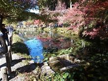 岐阜県(モネの池)