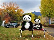 晩秋曇天でパッとしなくても季節のパンダ撮影はしておかないと…