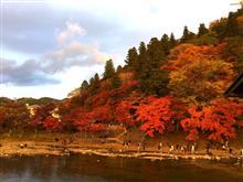 お見事!香嵐渓の紅葉