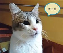 ハコにゃん家の6ニャンコ (猫ブログ)