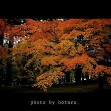 市街地で見つけた秋
