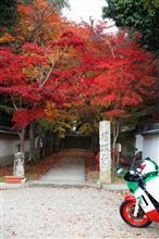 紅葉、ラストチャンス (`・ω・´)