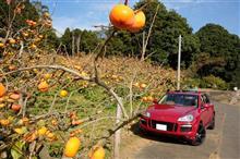柿、柿、柿 ~ 茨城石岡へ