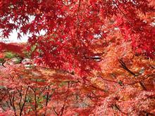 伊豆 修善寺 虹の郷の紅葉