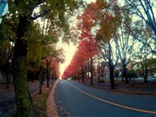 小さい秋を探しに
