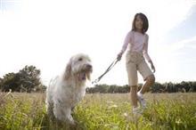 犬や猫を家族と見る日本人、「中国人に畏敬の念を抱かせる」=中国
