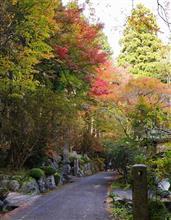 秋の箱根路から・・・