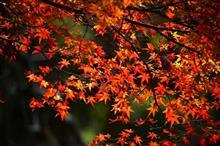 紅葉も本番か