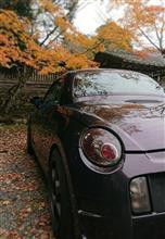 錦秋が終わり初冬へ「Autumn Leaves」
