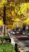 黄色の世界「圧巻、全長600mのイチョウ並木通り」
