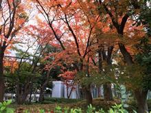 大阪ビジネスパークの紅葉名所