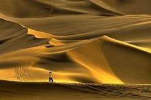 誰もが「信じられない」と口にする偉業、中国で砂漠の緑化に、尽力した日本人がいた=中国報道