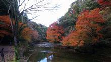 養老渓谷、紅葉真っ盛り!