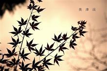 奥 津 渓  の 紅 葉