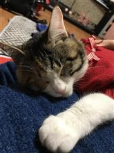 子猫と爆睡