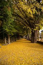 2017秋景色 名張市 積田神社-黄金色の絨毯-