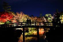 白鳥庭園ライトアップ 銀杏並木