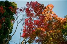 植物多様性センターで紅葉先取(撮)り♪