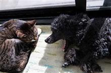 俗世とは無縁の犬と猫のお気楽な日常(^^)