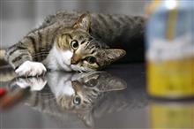 猫も呑みたがる旨~いビール♪