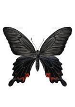 季節外れの蝶々が飛んできた~